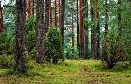 las wycisza moj umysl