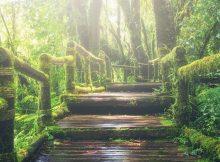 W lesie gra muzyka